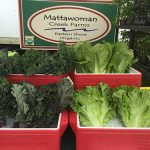 Cape Charles Farmers Market Still Needs a Logo