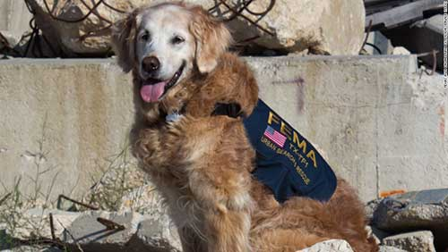 Rescue Dog Bretagne