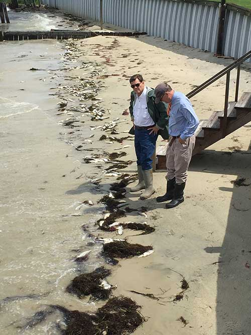 Supervisors Murray and Duer inspect menhaden spill (Photo RH Meyers)