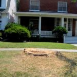 VIOLATION: Historic Tree Chopped Down without Permission