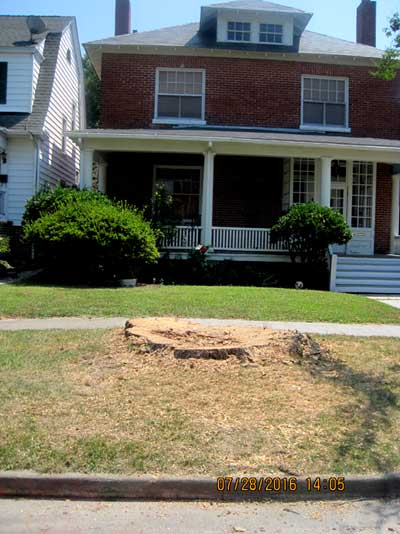 What is left of the old tree at 510 Monroe (Photo Town of Cape Charles)