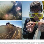 Join VIMS and Nature Conservancy for Seagrass seed collection in Oyster, VA