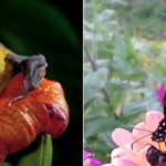 Three Ways to Celebrate National Pollinator Week