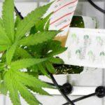 Legalize It, Don't Criticize It: Canada Legalizes Pot for all Adults